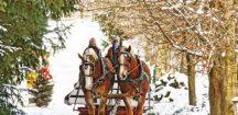 Horses pulling sleigh